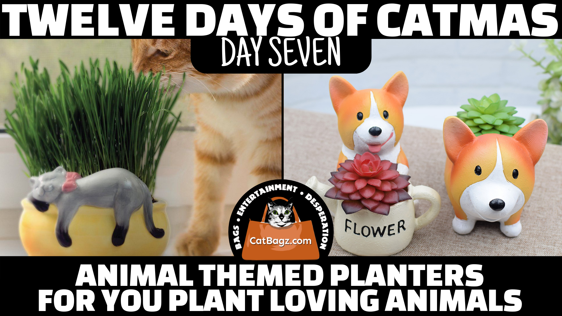 Twelve Days of Catmas - Day Seven - Animal Themed Planters For You Plant Loving Animals